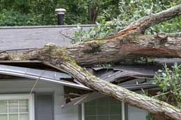 If a tree falls on your home