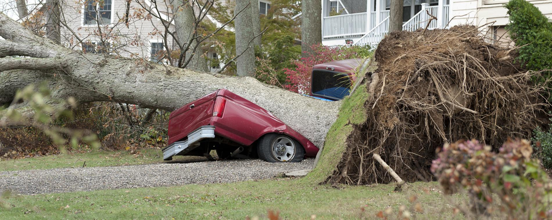 Car and truck insurance claim tree falls on car